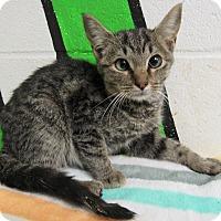 Adopt A Pet :: 16C-1302 (10/16) - Rome, GA
