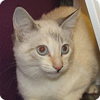 Adopt A Pet :: Molly - Jamestown, CA