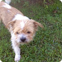 Adopt A Pet :: Terry - New Smyrna beach, FL