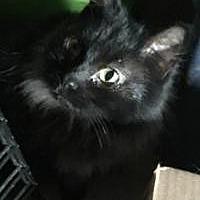 Adopt A Pet :: Kimber - Sedalia, MO