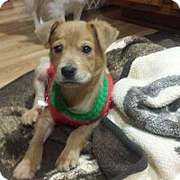Adopt A Pet :: Biff - joliet, IL