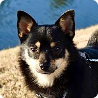 Adopt A Pet :: Elm - Pembroke, GA