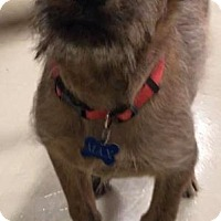 Adopt A Pet :: Topaz - Valparaiso, IN