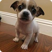 Adopt A Pet :: Washington - Bakersfield, CA