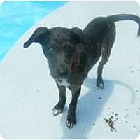 Adopt A Pet :: Chip - Orange Park, FL