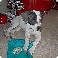 Adopt A Pet :: Rocky - Apex, NC