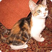 Adopt A Pet :: Cherie - Colmar, PA