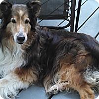 Adopt A Pet :: Shylah (Adopted) - Pittsburgh, PA