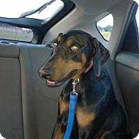 Adopt A Pet :: Maria - Allegan, MI