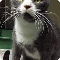 Adopt A Pet :: Prince - Richboro, PA
