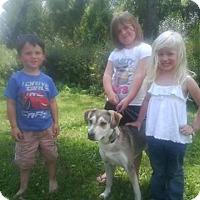 Adopt A Pet :: Elsa - ROME, NY