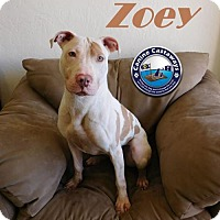 Adopt A Pet :: Zoey - Arcadia, FL