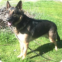 Adopt A Pet :: Dillon - Pleasant Grove, CA
