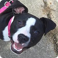 Adopt A Pet :: Cora - Memphis, TN
