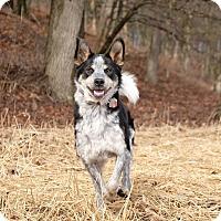 Adopt A Pet :: Benjamin - Delano, MN