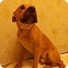 Adopt A Pet :: JUBILEE