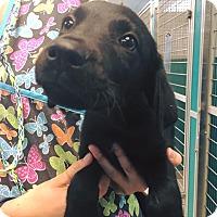 Adopt A Pet :: Cloney - Cumming, GA