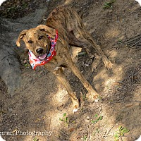 Adopt A Pet :: Maia - Muldrow, OK