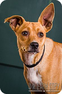 Terrier (Unknown Type, Small) Mix Dog for adoption in Owensboro, Kentucky - Tink