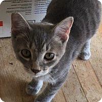 Adopt A Pet :: Bud - Danbury, CT