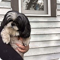 Adopt A Pet :: Kia - Sheridan, OR