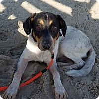 Adopt A Pet :: Titan - Cincinnati, OH