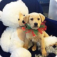 Adopt A Pet :: Cupid - BIRMINGHAM, AL