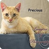 Adopt A Pet :: Precious - Oklahoma City, OK