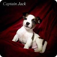 Adopt A Pet :: Captain Jack - Chester, IL