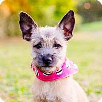 Adopt A Pet :: Debby - San Ramon, CA