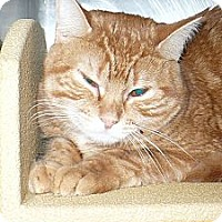 Adopt A Pet :: Shiloh - Colmar, PA