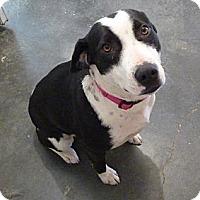 Adopt A Pet :: QUINN - Paron, AR