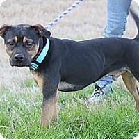 Adopt A Pet :: Oscar - Houston, TX