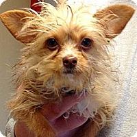 Adopt A Pet :: Delilah - Green Bay, WI