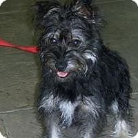 Adopt A Pet :: Zoey - Lockhart, TX