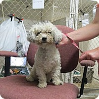 Adopt A Pet :: Maddie - Geneseo, IL