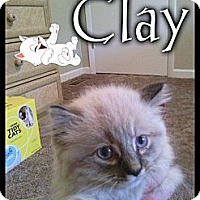 Adopt A Pet :: Clay - Washington, DC