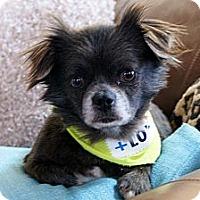 Adopt A Pet :: Sir Barkley - Princeton, KY