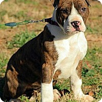 Adopt A Pet :: Ansley - Brattleboro, VT
