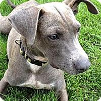 Adopt A Pet :: Polk - Homewood, AL