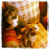 Adopt A Pet :: Pepper and Poodah - San Diego, CA