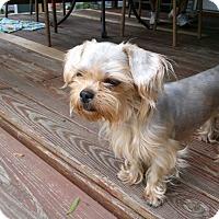 Adopt A Pet :: Mia - West Deptford, NJ