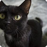 Adopt A Pet :: Polka Dot - Sarasota, FL