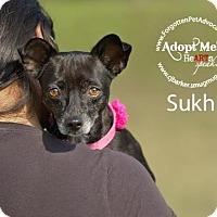 Adopt A Pet :: Sukhi - Pearland, TX