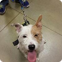 Adopt A Pet :: Sonny - Pembroke, GA