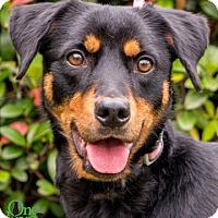Adopt A Pet :: Christmas - Savannah, GA