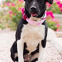 Adopt A Pet :: LANIE - Phoenix, AZ
