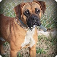 Adopt A Pet :: Blaze (Courtesy Listing) - Brentwood, TN