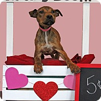 Adopt A Pet :: Genie - Waldorf, MD