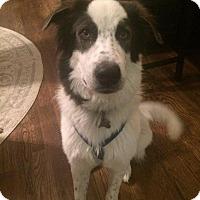 Adopt A Pet :: Columbus - Enfield, CT